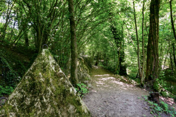 Noisetiers, chênes, charmes, ormes, aulnes, aubépines… Une multitude d'arbres et arbustes bordent le sentier.