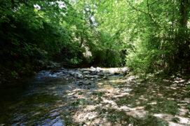 Le sentier suit le cours du ruisseau de la Combe puis de la Serine. / ©  Thomas Martignier