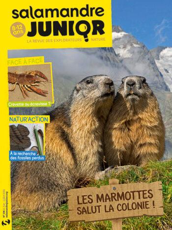 Couverture de La Salamandre Junior n°136