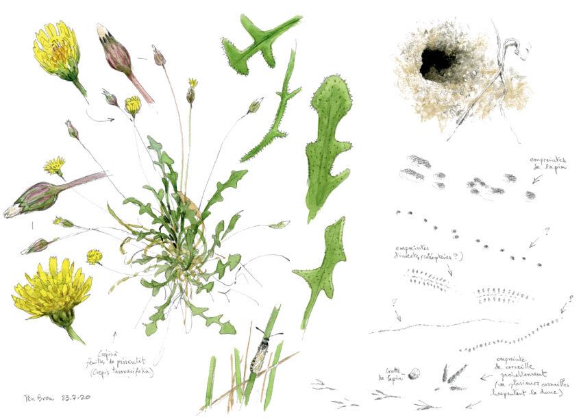 Plantes et insectes de la dune