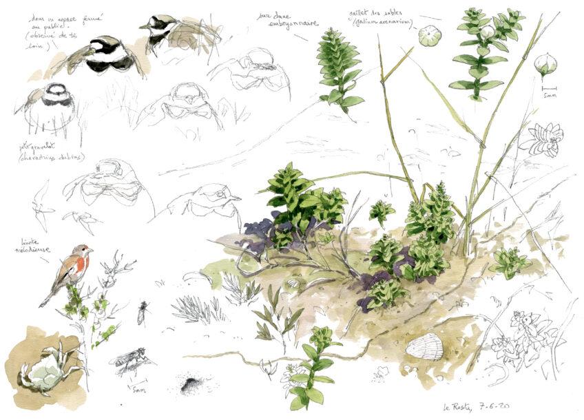 Plantes et oiseaux de la dune