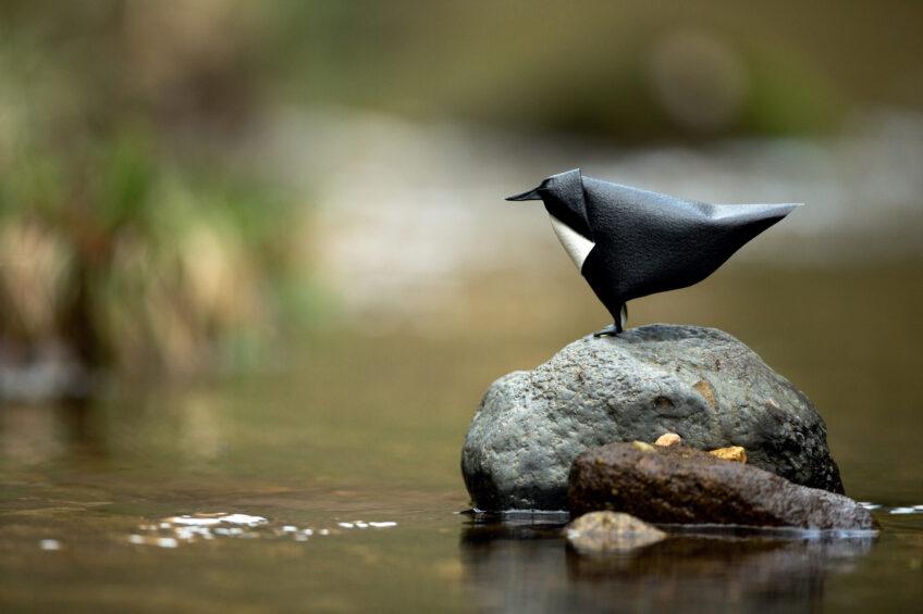 Origamis : des oiseaux de papiers dans leur environnement
