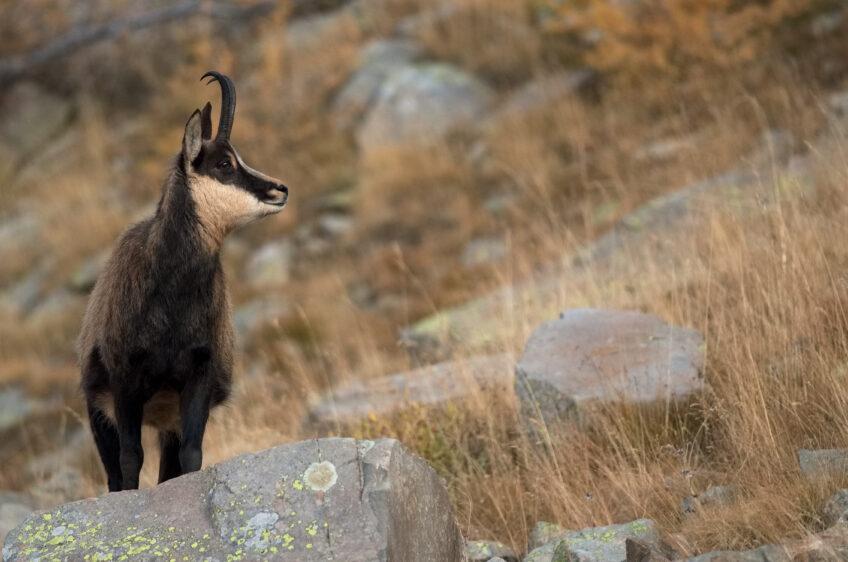 Mont Ventoux, balade nature entre pierres et loups