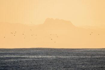 Goélands devant le massif basque des Trois Couronnes