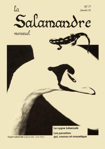 Couverture de La Salamandre n°77