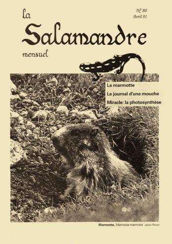Couverture de La Salamandre n°80