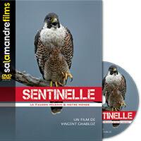 DVD Sentinelle, le destin du faucon pèlerin