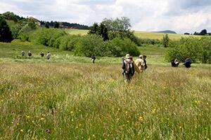 prairies-fleuries