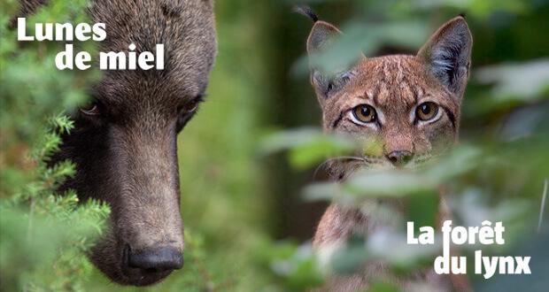 Ours et lynx : 2 livres événements!