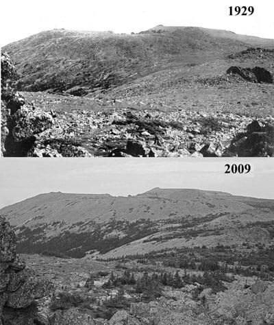 La progression des forêts est nettement visible entre 1929 et 2009