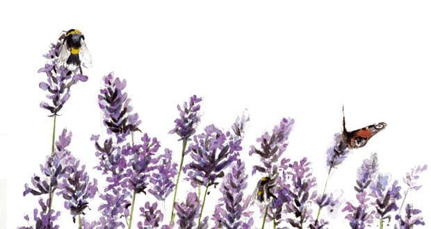 Des fleurs pour les bourdons et autres abeilles