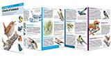 Miniguide 72 : chants d'oiseaux