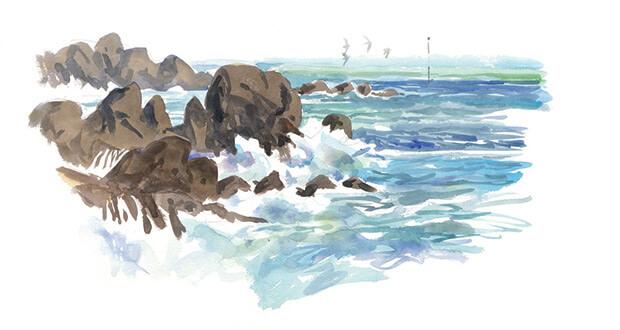 Basse mer pleine de vie