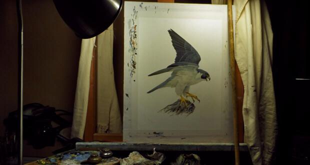 Naissance des faucons pèlerins dans l'atelier de Marco Preziosi