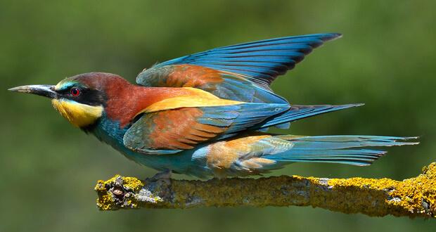 chaud pour les oiseaux