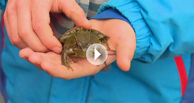 passeurs de grenouilles