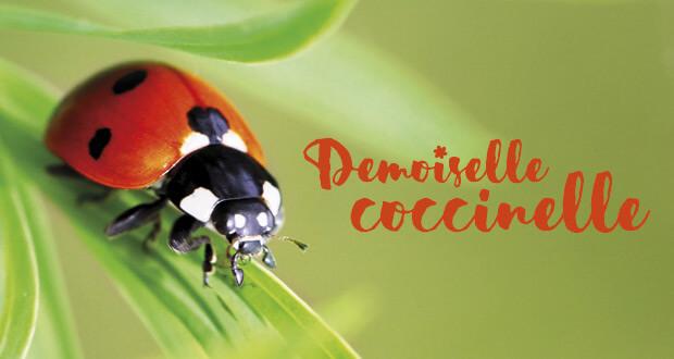 La Petite Salamandre n°5 : Demoiselle coccinelle