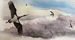 La RTS cherche la cigogne noire