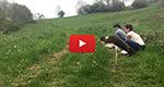 Une cigogne noire relâchée dans le Jura